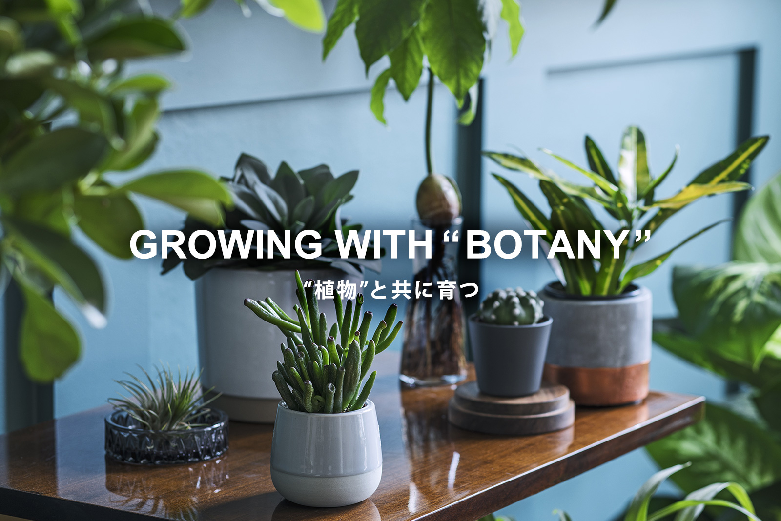 growing with botany 植物と共に育つ リビング